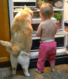 """Cat: 'I'll take some of this chicken and you take a yogurt since you don't have too many teeth."""""""
