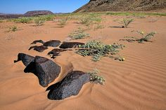 Travel Namibia Namibia, Grand Canyon, Earth, Explore, Nature, Travel, Rocks, Viajes, Naturaleza