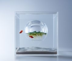 Aquariums Filled With 3D Printed Flora by Designer Haruka Misawa