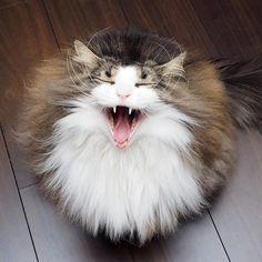 VIDEO CATS  (@videocats)   Twitter