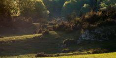 Zsidó-rét • Növényvilág » TERMÉSZETJÁRÓ - FÖLDÖN, VÍZEN, KÉT KERÉKEN Trekking, Painting, Painting Art, Paintings, Painted Canvas, Drawings, Hiking