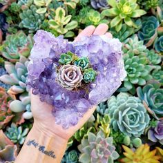 Succulents and amethyst. Crystal Magic, Crystal Healing, Amethyst Crystal, Crystals And Gemstones, Stones And Crystals, Crystal Aesthetic, Crystal Garden, Crystal Flower, Crystal Decor