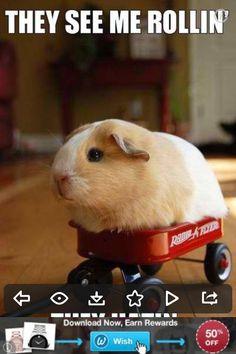 Animal taking a ride