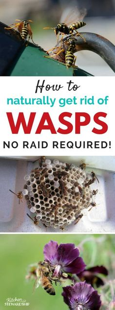 You don't need Raid or yucky chemicals to kill a wasp nest or bees. Get rid of wasps without chemicals with this super simple natural wasp killer spray recipe. Bee Killer, Wasp Killer, Bee Spray, Wasp Spray, Natural Wasp Repellent, Insect Repellent, Wasp Deterrent, Get Rid Of Wasps, Bees And Wasps