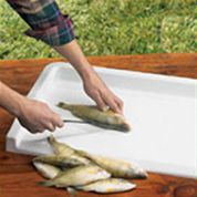badd51ad386147324f201e45d066fa66 hiking gear camping survival fish cleaning station fish cleaning station pinterest fish,Fish Cleaning House Plans