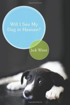 What do you think: Will we see our dogs and cats in the hereafter? Does God's plan for eternity include the created non-human world? Franciscan friar and popular writer Father Jack Wintz brings a love for all creation and infectious enthusiasm to the serious task of exploring answers to these long-asked questions.