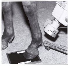 Larry Sultan + Mike Mandel . 1977