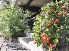 Vegetables, Holiday, Food, Vacations, Essen, Vegetable Recipes, Holidays, Meals, Yemek
