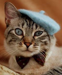 ■⊱⚜my parisian life⚜...        DAPPER CAT - - love the way color of hat matches color of eyes - - MMEEEOOW!!!