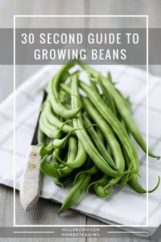 Quick reference guide - how to grow beans. pH, water, hours of sunlight, etc. Everything you need to know for your vegetable garden to grow beans. Growing Green Beans, Growing Peppers, Vegetable Garden Tips, Container Gardening Vegetables, Vegetables Garden, Vegetable Dishes, Garden Plants, Square Foot Gardening, Chinese Garden