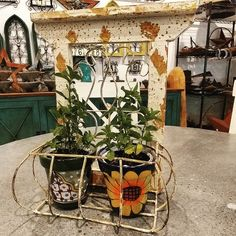Mexican Garden, Plants, Design, Old Town, Plant, Planets