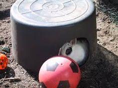 Afbeeldingsresultaat voor speeltjes maken voor konijnen