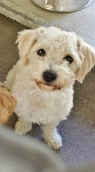 Adopted!** Family adopts young, sweet terrier from busy shelter: Returns pup 2 days later