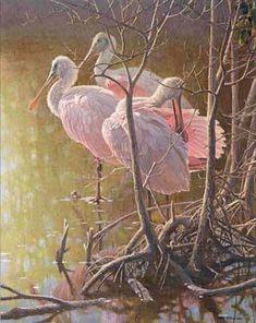 Robert Bateman Mangrove Morning Roseate Spoonbills