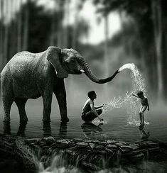 Black and White Photography People: Get Professional Looking Pictures With These Tips – Black and White Photography Animal Photography, Amazing Photography, Nature Photography, Elephant Photography, Pinterest Photography, Fotografia Pb, Animals Beautiful, Cute Animals, Elephant Love