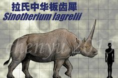 Sinotherium lagrelii by sinammonite on DeviantArt