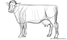 How to Draw a Cow: A Guide on Sketching out Realistic Cow Drawings!