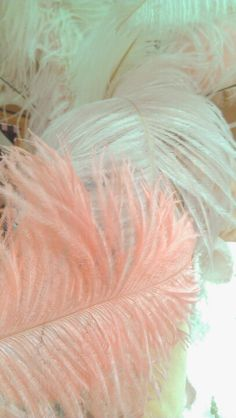pink ostrich feathers ♥