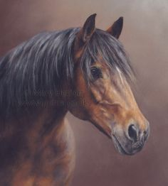 """Guinness by Mary Herbert 12x8"""" pastel commission by Mary Herbert www.portra.co.uk"""