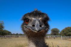 Namibia || Struś || www.szczytyafryki.pl || #Namibia #Struś #Afryka