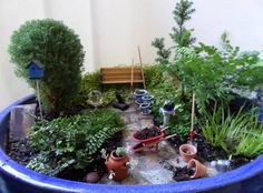 The WINNERS from The Great Annual Miniature Garden Contest!