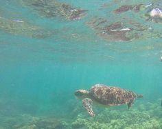 #greatbarrierreef #cairns #australia #wildlife #protectthereef by euwn http://ift.tt/1UokkV2