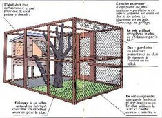 CCFN - Les chatteries - Cat playground outdor - How to create a perfect outdoor play area Dog Cage Outdoor, Outdoor Cats, Outdoor Play, Rabbit Enclosure, Outdoor Cat Enclosure, Bunny Cages, Cat Cages, Feral Cat House, Reptile House