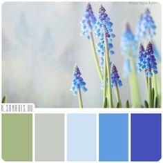 голубой цвет цветов