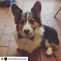 Pin now, shop later! We customize your pets perfectly matched wedding or engagement attire. With over 60+ colors your pet will make the perfect ring bearer Dog of Honor. We have matching collars, leashes, bow ties, tie, bandanas, and wedding ring band attachments.