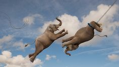 Elephants performing a flying trapeze