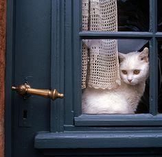 A cat waits at the door.