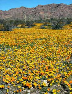 97 Best Arizona Desert Blooms Images Deserts Dessert Desserts