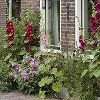 Example of a very small front garden (geveltuintje)