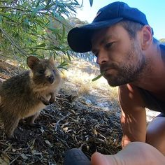 It may have taken him 35 years, but Chris Hemsworth finally checked an important to-do off his Australia bucket list: get a quokka selfie. The actor left his Liam Y Chris Hemsworth, Marvel Fan, Marvel Avengers, Por Tras Das Cameras, Hemsworth Brothers, Z Cam, Quokka, Man Thing Marvel, Marvel Actors
