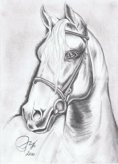 Pencil Drawings Of Animals, Horse Drawings, Animal Sketches, Girl Drawing Sketches, Cool Art Drawings, Horse Sketch, Horse Artwork, Horse Head, Pet Portraits