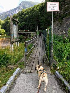 Railroad Tracks, Wanderlust, Hiking, Dogs, Bucket, Travel, Animals, Vacation, Pet Dogs