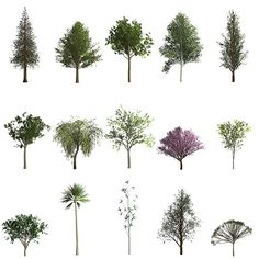 Threes from left to right, top to bottom: Redwood, Ginko, Young Maple, Aspen, Populus Nigra, Yound Ash, Willow, Young Robina, Sakura Cherry Blossom, Fraxinus Griffithii. Acer, Palm, Bamboo, Cyprus, Stylized Tree #.