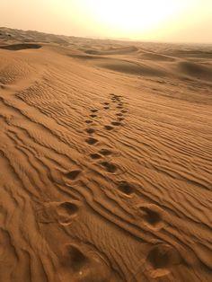 Der Trip in die Wüste von Dubai war faszinierend und atemberaubend. Der Blogpost zu meiner Dubai-Reise mit vielen Reisetipps und Must-See's kommt bald online! #dubai #travelblog #reiseblogger #reisetipps #desert #wüstensafari #wüste In Dubai, Dubai City, Walt Disney World, Dubai Guide, All Falls Down, Desert Life, Dubai Travel, Desert Plants, Natural Scenery