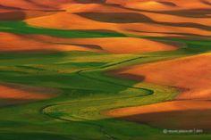 Palouse Washington | Flows of Green by Vincent Piotrowski