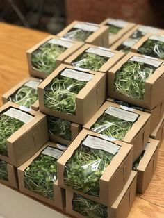 """Microgreens in our new environmentally friendly packaging. Head out to North Beach on their Grand Reopening! Salad Packaging, Tea Packaging, Food Packaging Design, Vegetable Packaging, Environmentally Friendly Packaging, Organic Packaging, Vegetable Shop, Growing Microgreens, Fruit Shop"