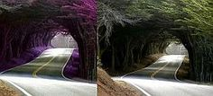 "Fake - Pinned as ""Tree Tunnel, Portugal"". It isn't purple and it ""is"" in the USA - The original image is on the right. This amazing tree tunnel is located in Mendocino County, California. On U.S. Highway 1, just north of Seaside Beach(or north of MacKerricher State Park, Fort Bragg)."