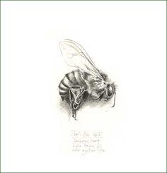 Honey Bee Pencil Drawing by pencilandleaf, via Flickr