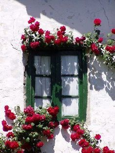 Window Shutters, Window Boxes, Window Sill, Arched Windows, Old Windows, Windows And Doors, Cottage Windows, Window Planters, Flower Window