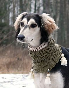 Rough and tumble neck snood for a gorgeous black and tan Saluki | Marlo'n The Saluki by eljakim.deviantart.com on @deviantART