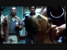 Amores Perros Trailer