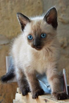 hEllo Caid !! #cute #kitten #animal #pet #cat #kitty #meow #chat Discover other photos HERE ==> http://www.yummypets.com/pic/2270439