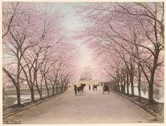 Akasaka, Tokyo © New York Public Library (NYPL)