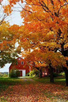 Fall Scene in Maine