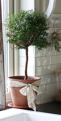 <3 the ribbon around the clay pot. . .the topiary of herbs