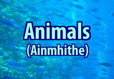 #irishfortheeyes Learn Gaeilge, the Irish language. animal, animals